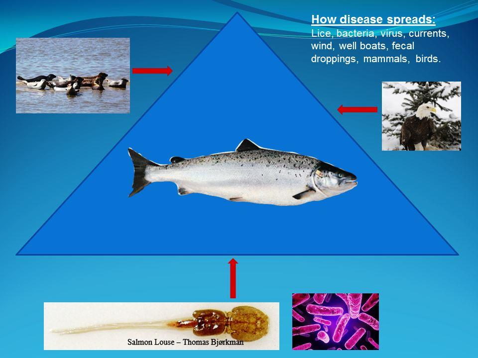 Closed Containment Salmon RAS - Pathogen Entry Points