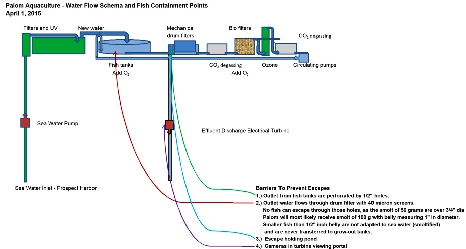 RAS Aquaculture - Water flow schema of the system proposed by Palom