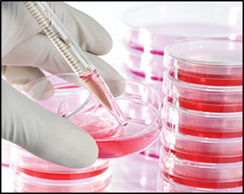 Palom Aquaculture has potential to cut the use of calf embryo blood for scientific research - Using growth media
