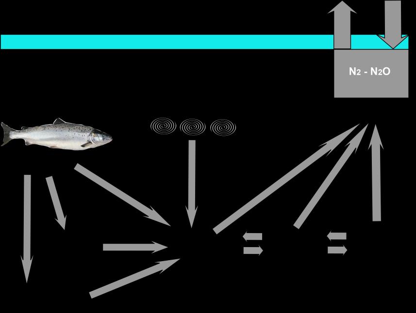 biofilter, nitrogen cycle